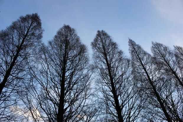 昼間の並木