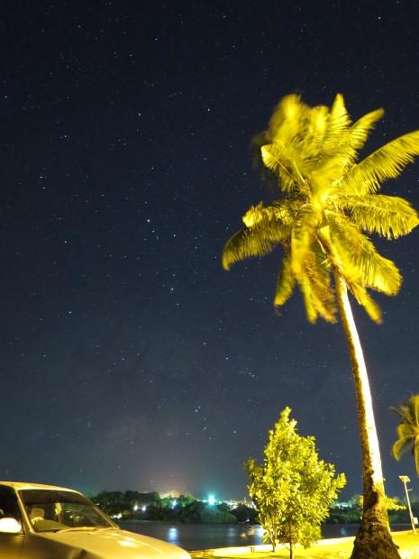 椰子の木と車とさそり